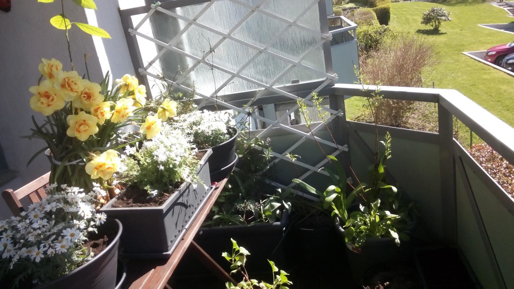 Облагораживаем балкон с помощью цветов.